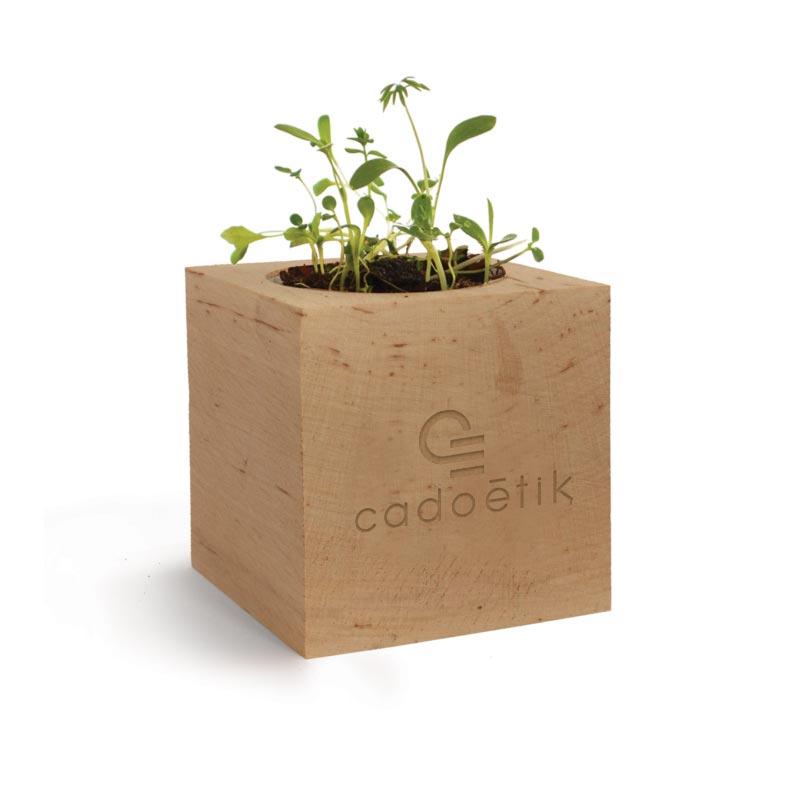 Cube en bois à graines