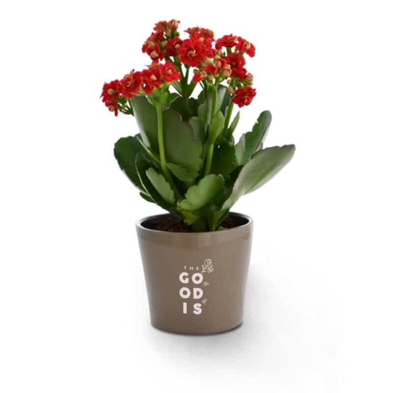 Goodies entreprise - Mini plante dépolluante en pot ceramique