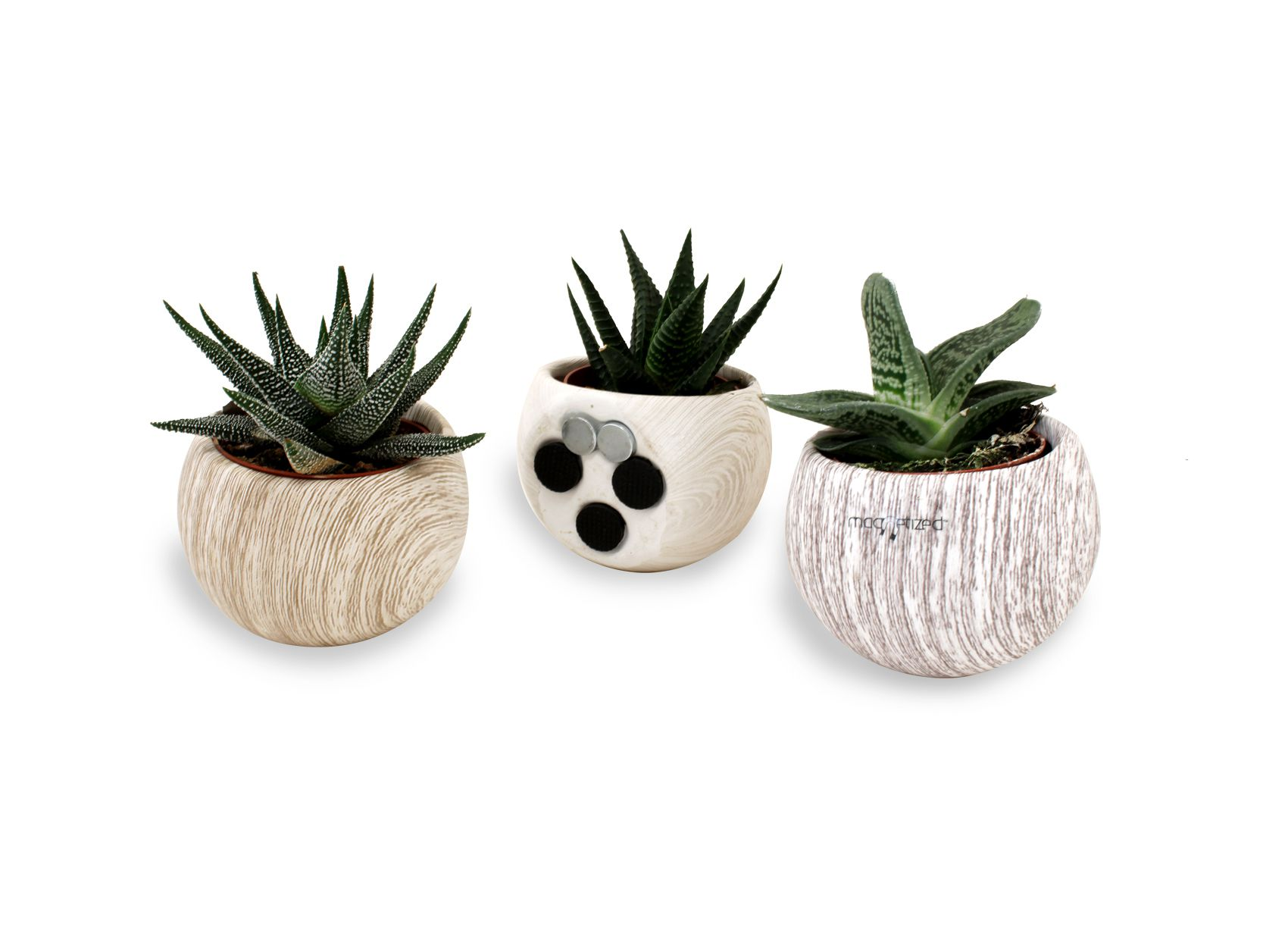 Plante dépolluante en pot magnétique aimanté boule aspect bois