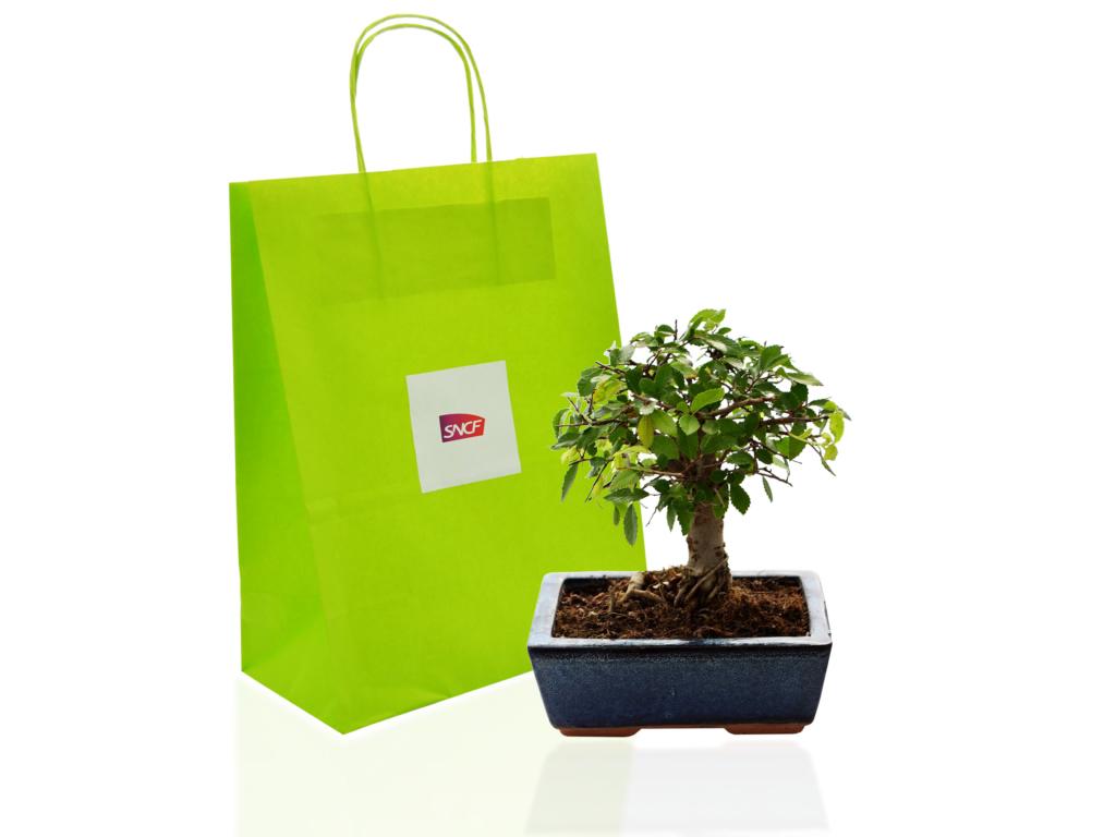 Bonsaï publicitaire - plante publicitaire