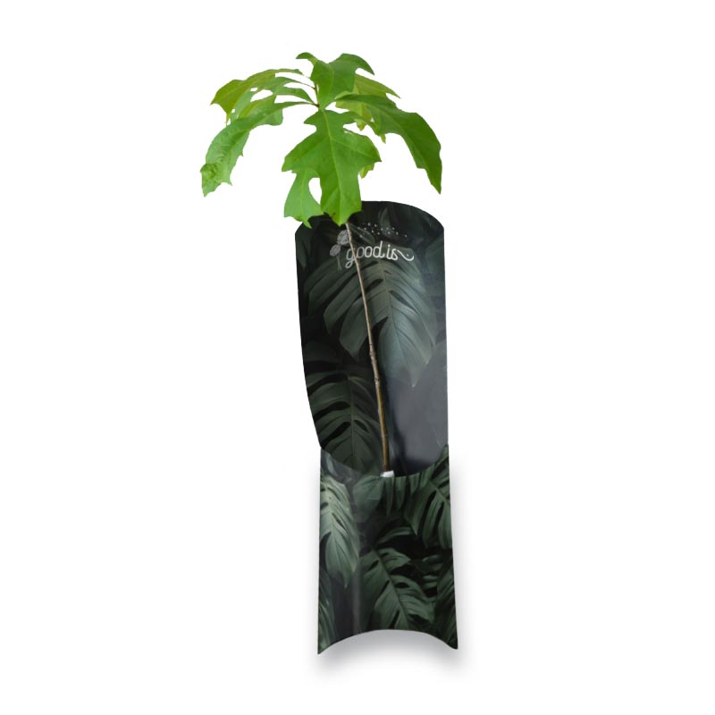 L'Etui plant d'arbre Standard