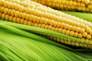 matière amidon de maïs cadoetik