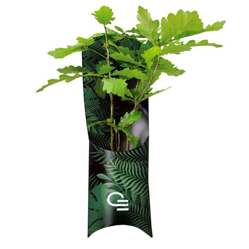 L'étui plant d'arbre publicitaire Standard - Goodies végétal