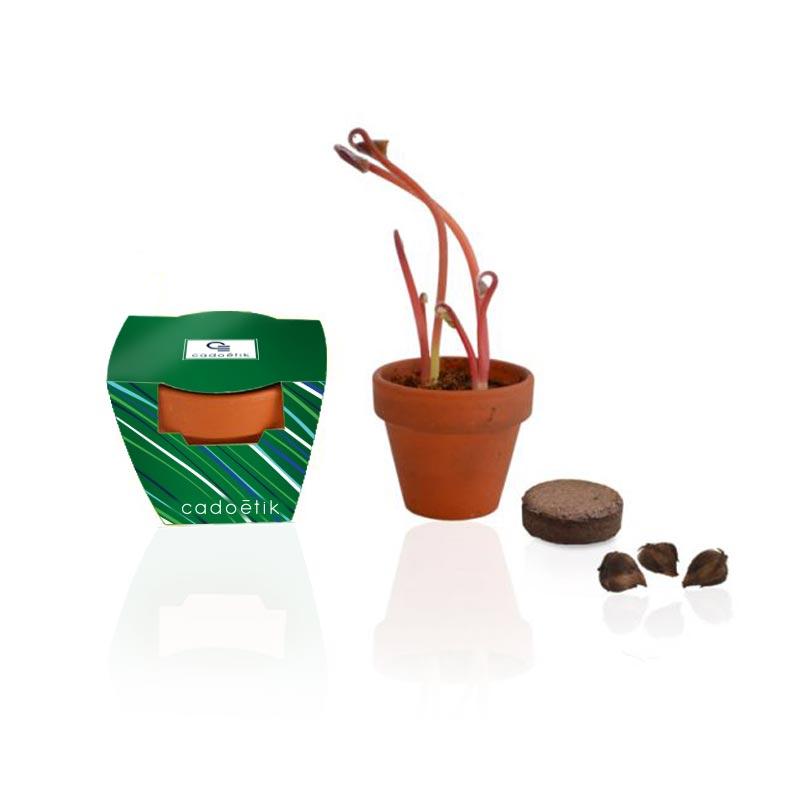Goodies green - Kit de plantation terre cuite  avec bulbes trèfle
