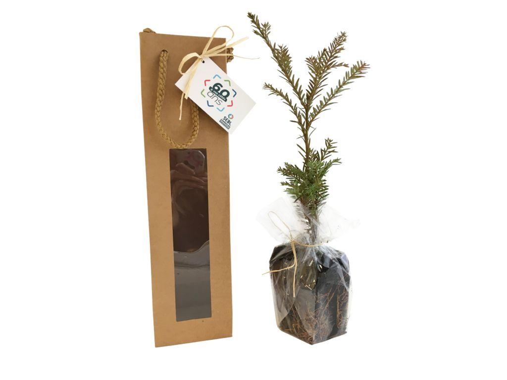 Plant arbre en sac kraft fenêtre Résineux - plant d'arbre publicitaire