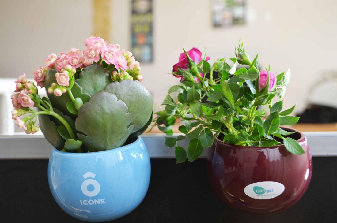 Plante dépolluante en pot aimanté céramique - plante personnalisable