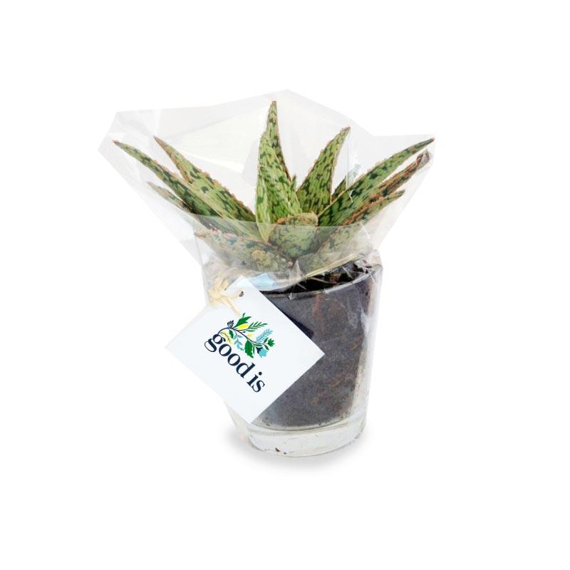 Mini Dépolluante en vase verre