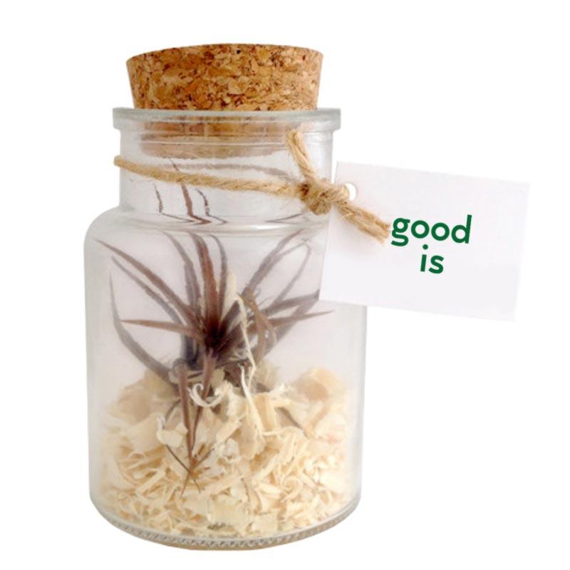 cadeau publicitaire végétal - Tillandsia personnalisé mini bouteille