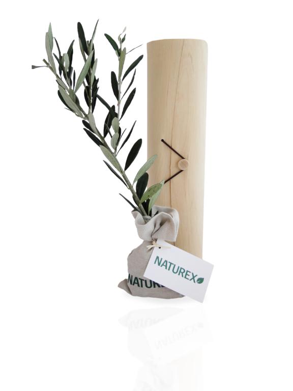 Plant arbre publicitaire en tube bois avec cordelette  Prestige