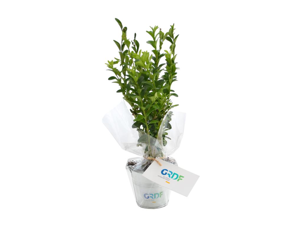 Plant arbre en pot zinc Feuillus - objet publicitaire végétal