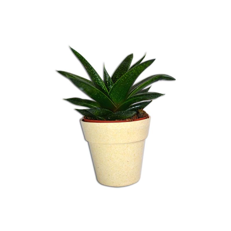 Cadeau d'entreprise écologique - Plante publicitaire pot bambou Naturae
