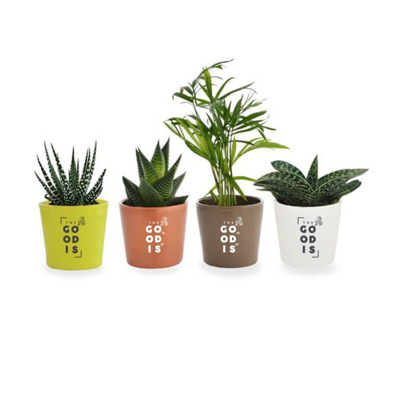 Cadeau d'entreprise écologique - Mini plante dépolluante en pot ceramique