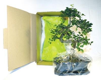 Cadeau d'entreprise - Bonsaï 3 - 10x15 cm en carton individuel