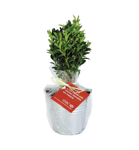 Plant arbre en pot zinc Feuillus - cadeau personnalisable végétal