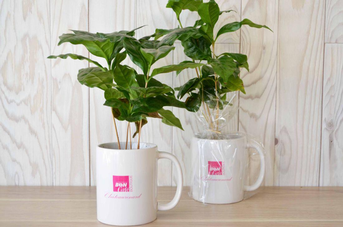 Caféier en mug personnalisable - plante publicitaire