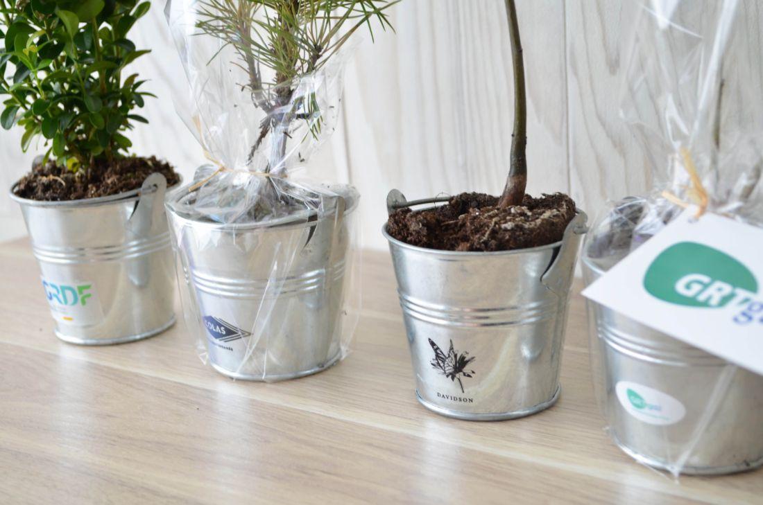 Plant arbre en pot zinc Feuillus - cadeau d'entreprise végétal