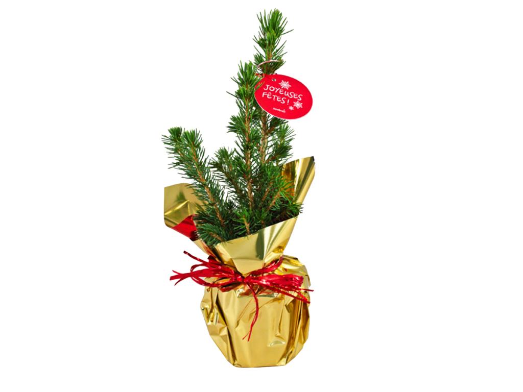 Sapin de Noël personnalisable - Plante publicitaire
