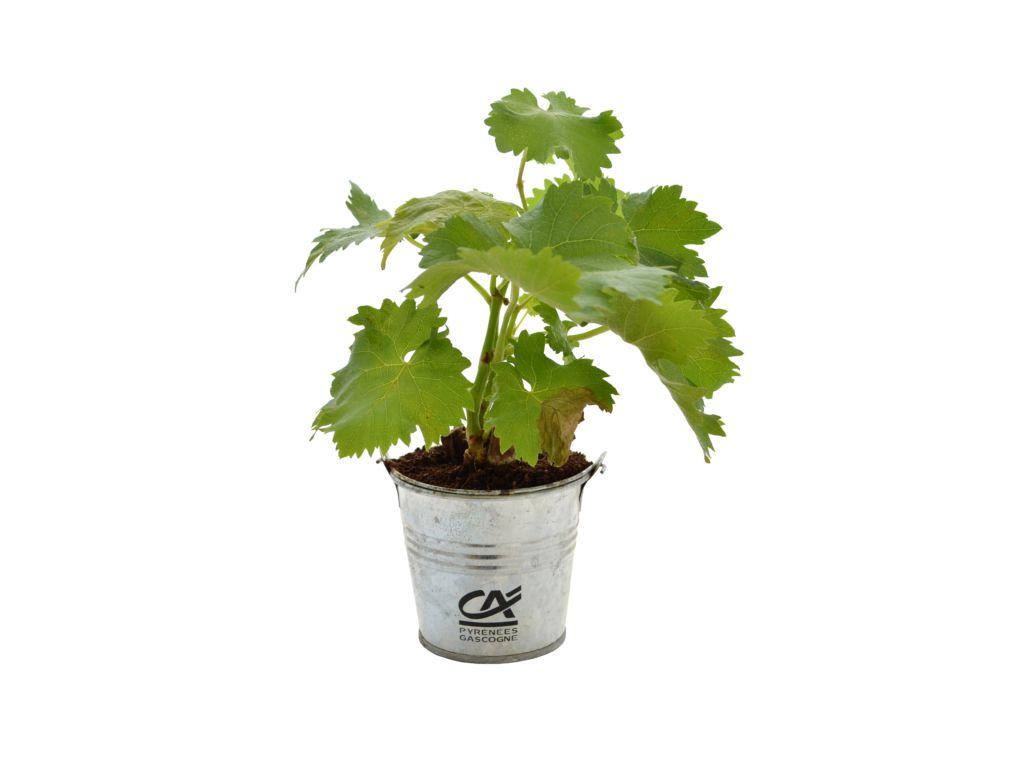 Plant arbre en pot zinc Feuillus - plant d'arbre personnalisé