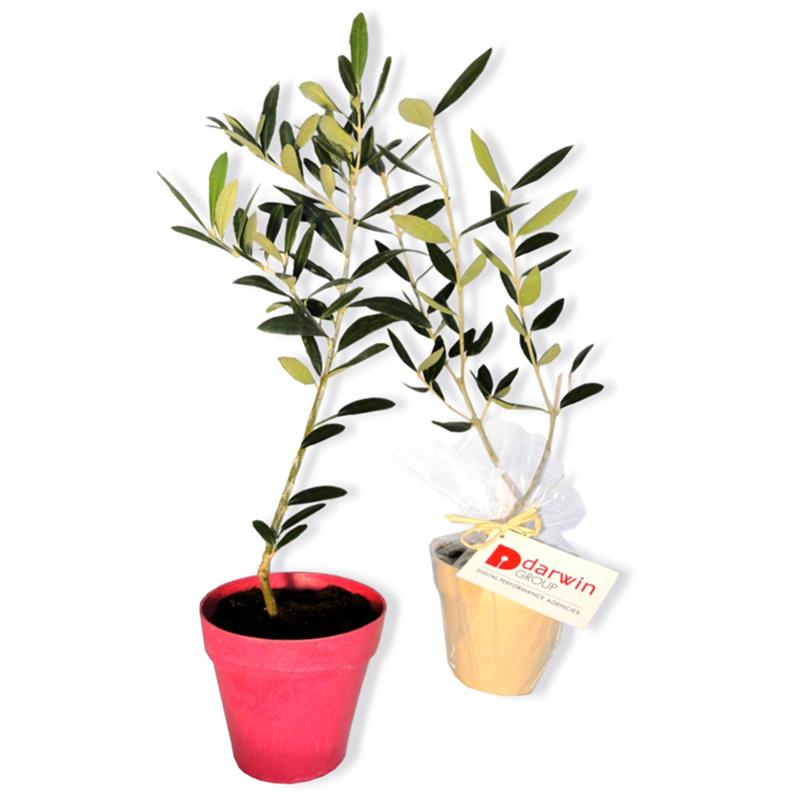 Plant d'arbre personnalisable Prestige pot bambou - Cadeau d'entreprise écologique
