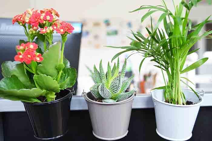 Plante personnalisable en pot zinc aimanté Lara