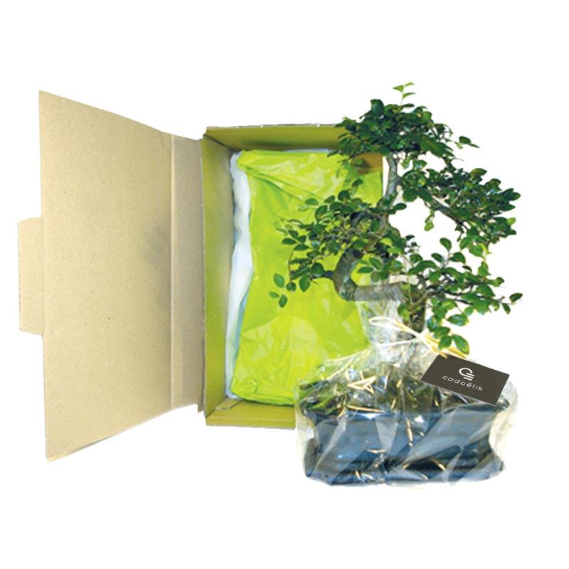 Bonsaï personnalisable 10 x15 cm - Cadeau d'entreprise végétal