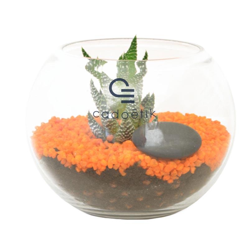 Petit terrarium avec kit de plantation publicitaire