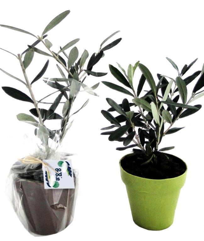 Plant d'arbre en pot Fibre de Bambou 10 cm -Feuillus