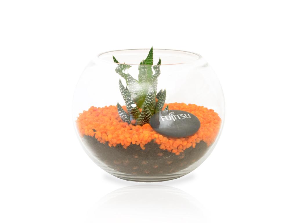 kit de plantation personnalisable - Terrarium personnalisé GM