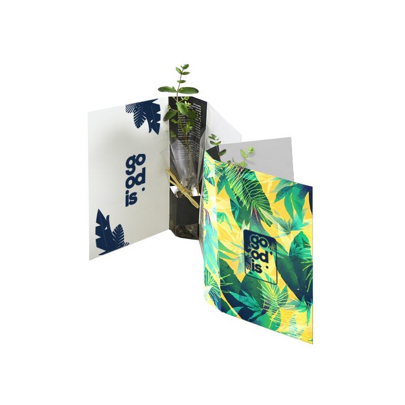 Plante publicitaire - La plante postale Bambou,Olivier, Eucalyptus