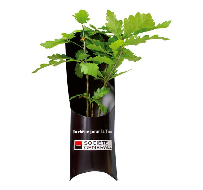 Plant d'arbre publicitaire - Etui Plants de Feuillus