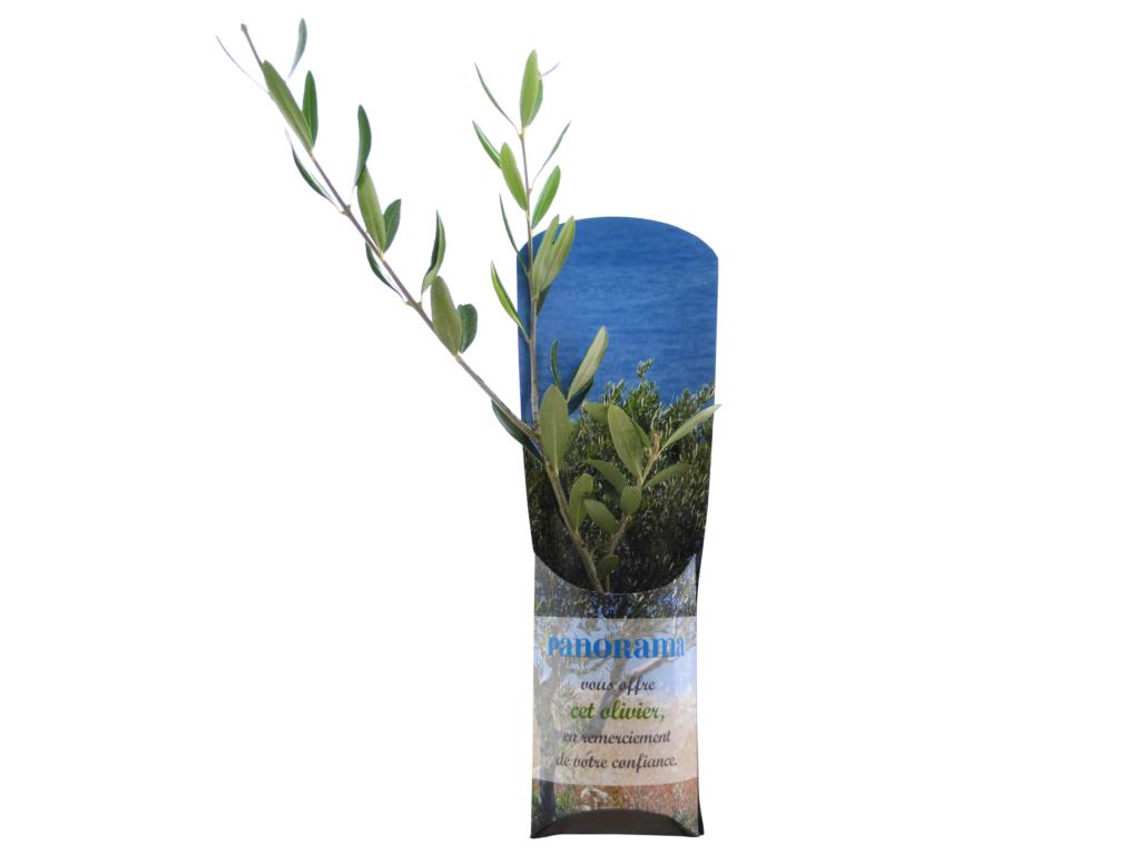 Etui arbre Prestige - plant d'arbre personnalisé