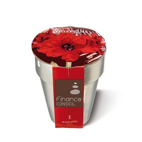 kit de plantation publicitaire - Bulbes de Noël en pot argent