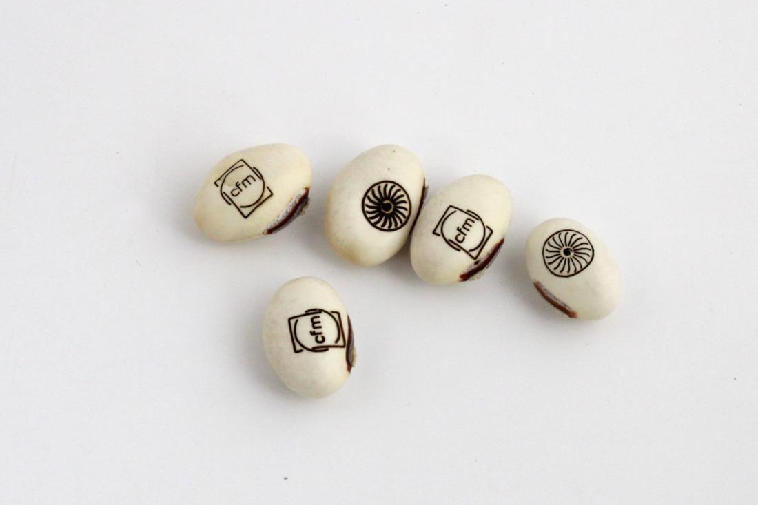 La graine gravée - Haricot blanc