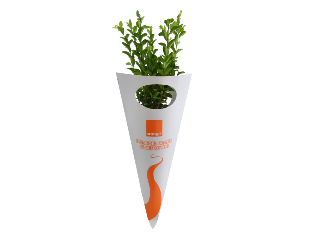 Plant d'arbre publicitaire - Plants de Feuillus en Cornet Kraft