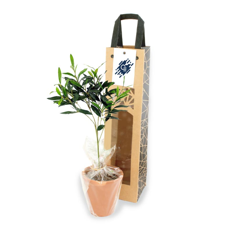 Plant d'arbre Prestige en sac kraft black collection