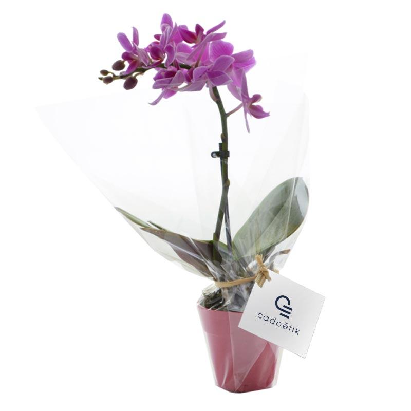Plante publicitaire en pot Orchidée