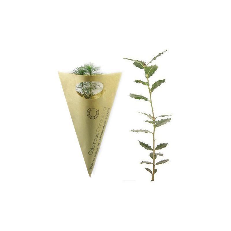 Plant d'arbre personnalisé en Cornet Kraft Feuillus