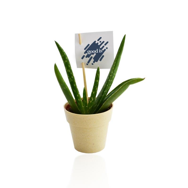 Plante déco en pot Ecolo