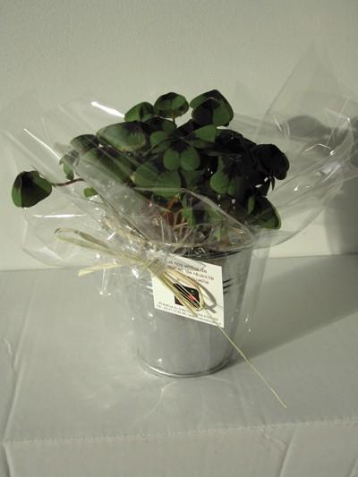 Plante publicitaire - Trèfle à 4 feuilles publicitaire en pot zinc de 10 cm de diamètre