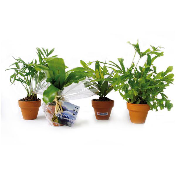 Mini plante dépolluante - cadeau personnalisable végétal