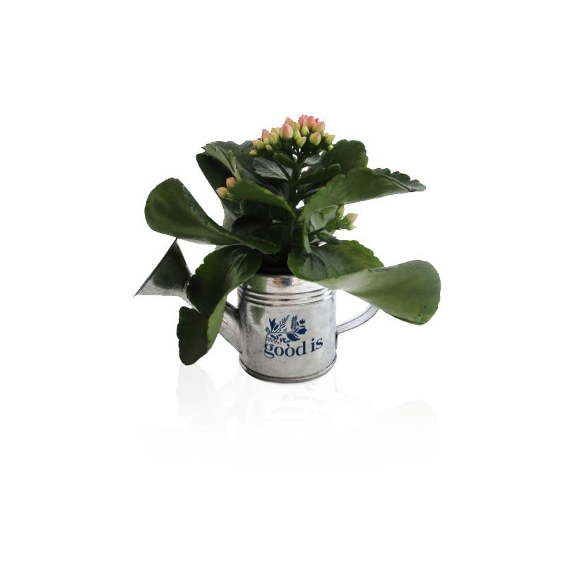 Arrosoir en zinc avec mini plante fleurie