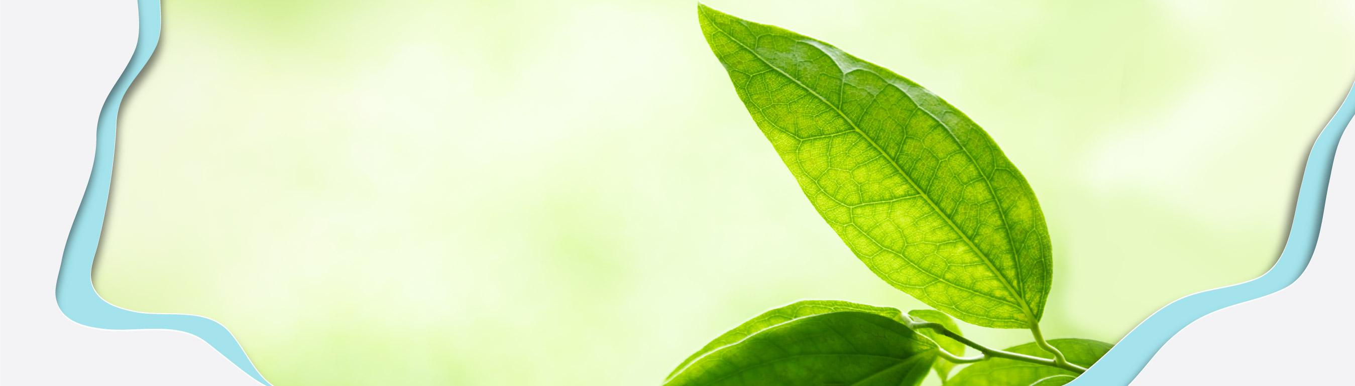 bandeau plastique végétal