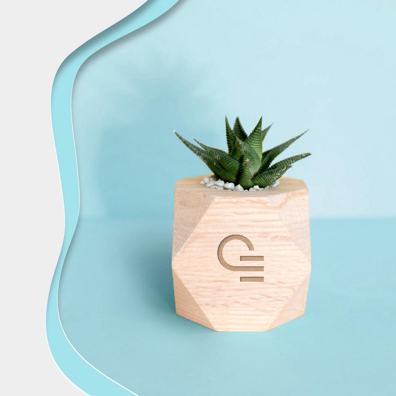 plante personnalisée - cadeau d'entreprise végétal