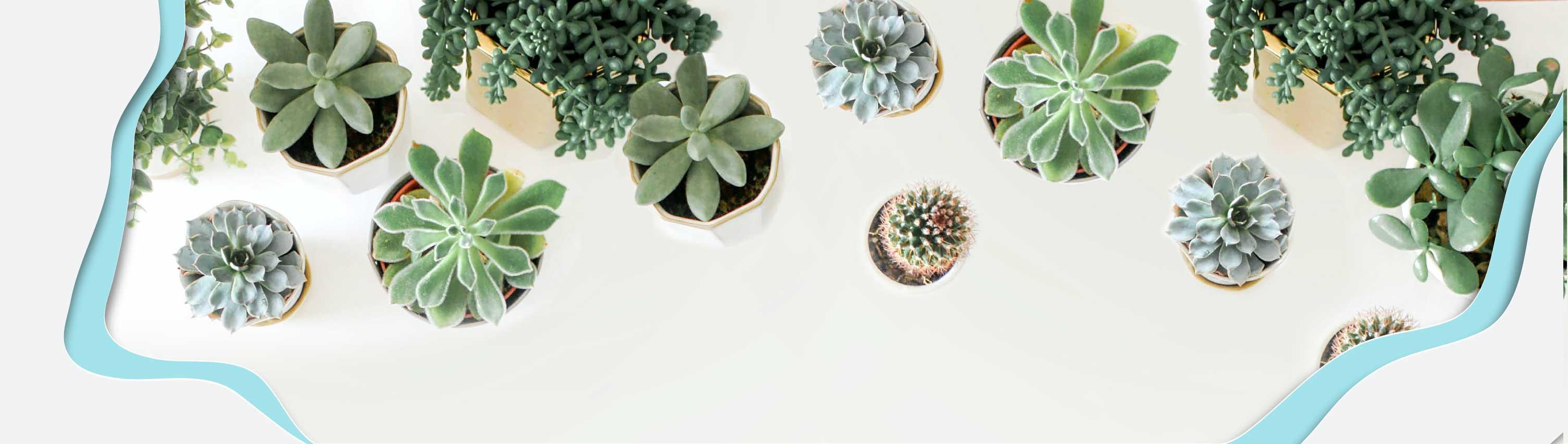 goodies végétal - cadeau d'entreprise écologique