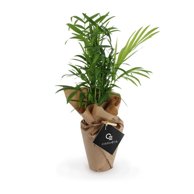 Plante publicitaire Palmier avec pot biodégradable zéro déchet