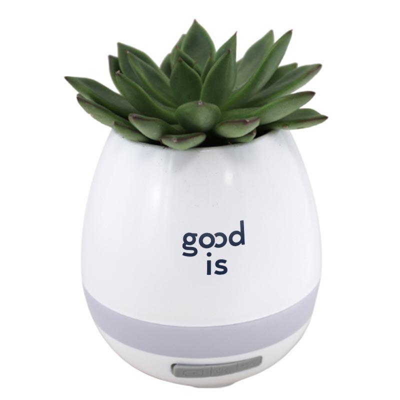 goodies plante - pot musical avec haut-parleur