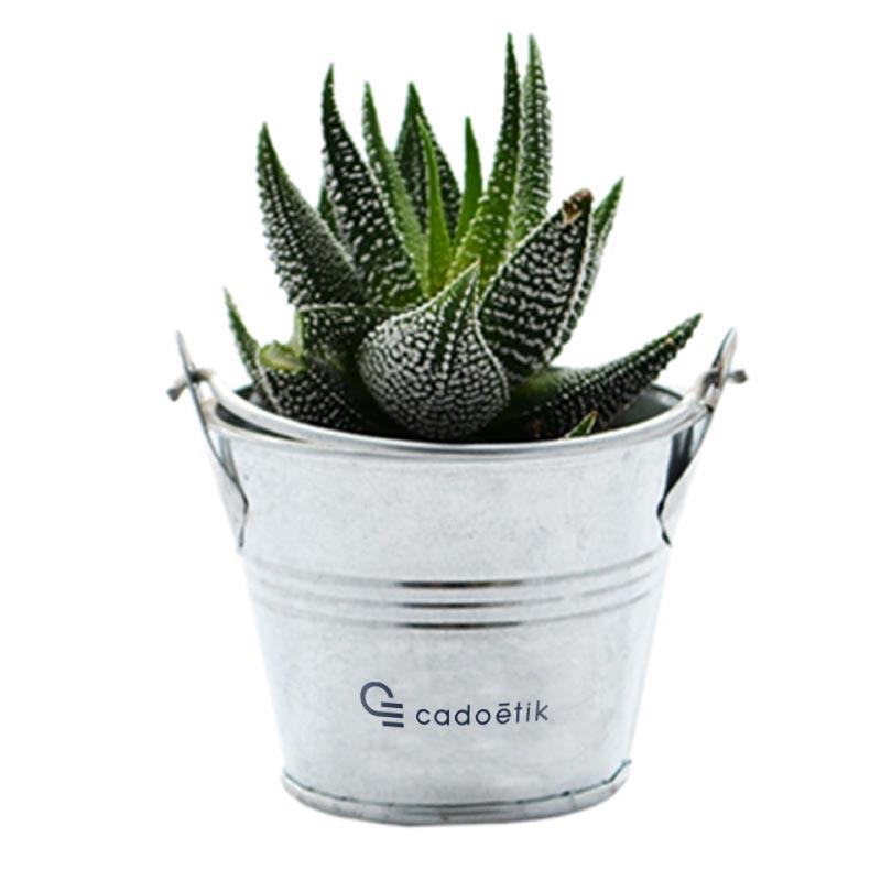 Mini plante dépolluante publicitaire