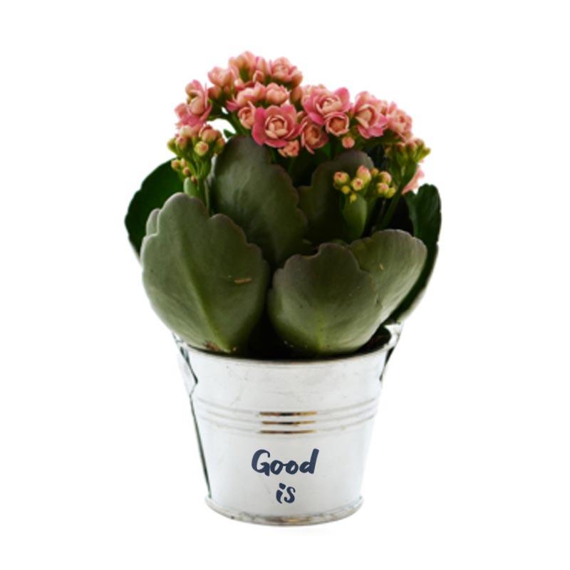 Mini plante fleurie en pot zinc
