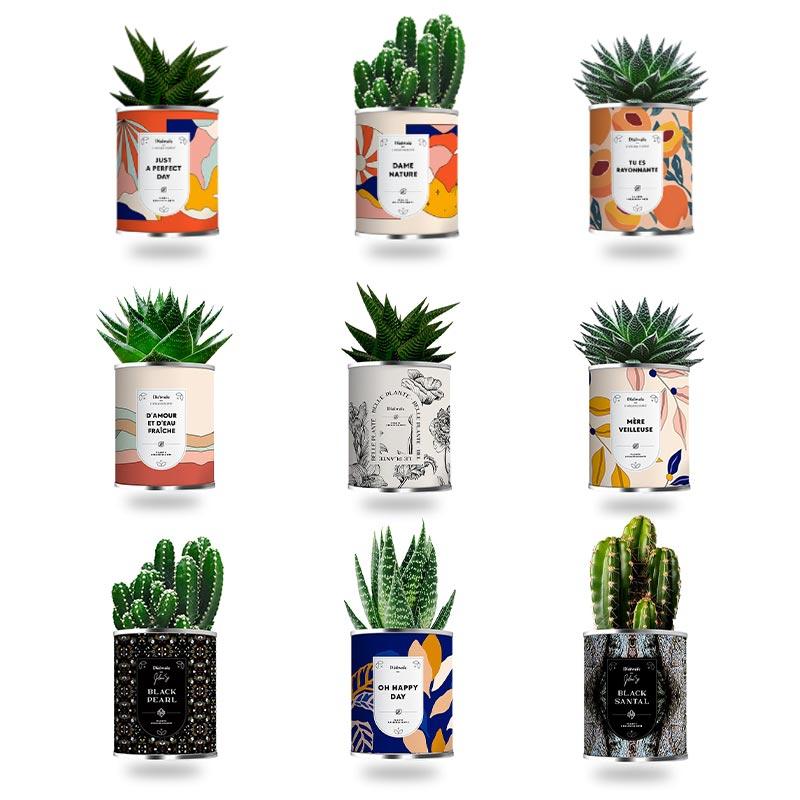 Mini plante personnalisable assainissante en pot - Motifs disponibles