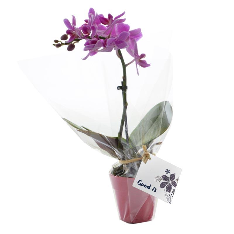 Plante fleurie publicitaire petit modèle